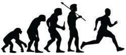 Car Stickers - Running Evolution
